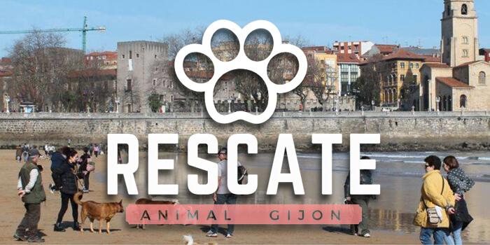 Colaboración Animal en Gijón